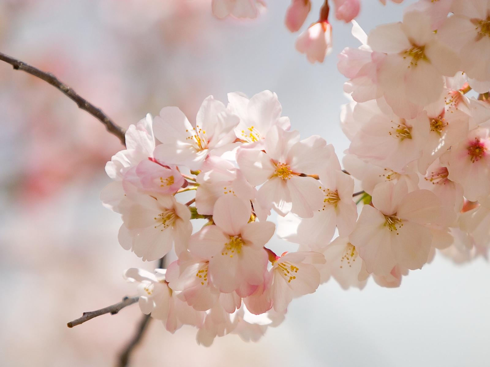 Gardening_Spring_Flower