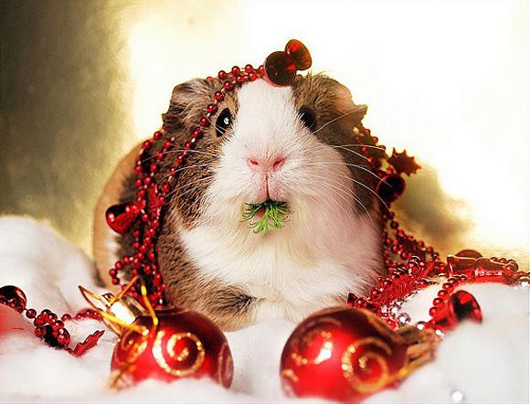 Christmas-Balbinka-l